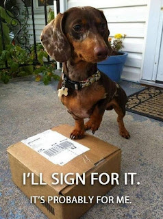 Funny Dog Humor ; I got a package in the mail today