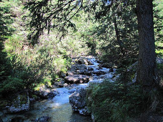 Mała Zimna Woda (słow. Malý Studený potok, niem. Kleiner Kohlbach, węg. Kis-Tar-patak).