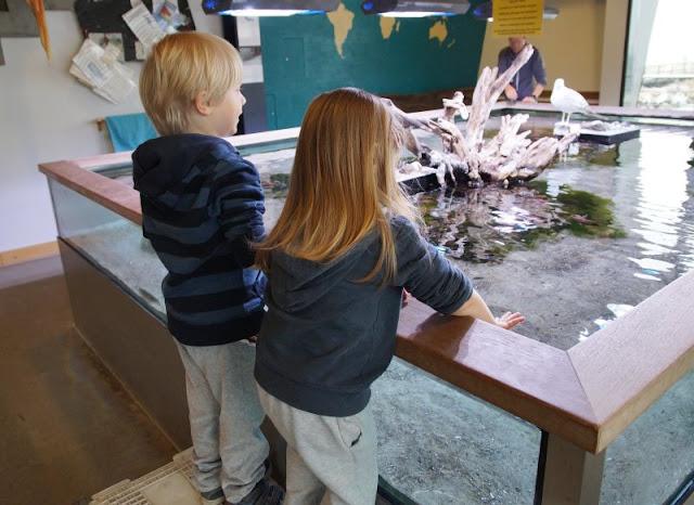 5 Ausflüge mit Kindern in Kiel bei Regenwetter. Ein Ausflug ins Ostsee Info-Center Eckernförde macht Kindern Spaß und ist regensicher!