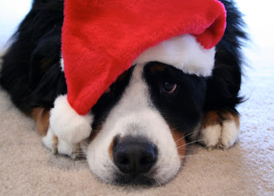8 Good Reasons Why You Shouldn't Give a Dog as a Gift