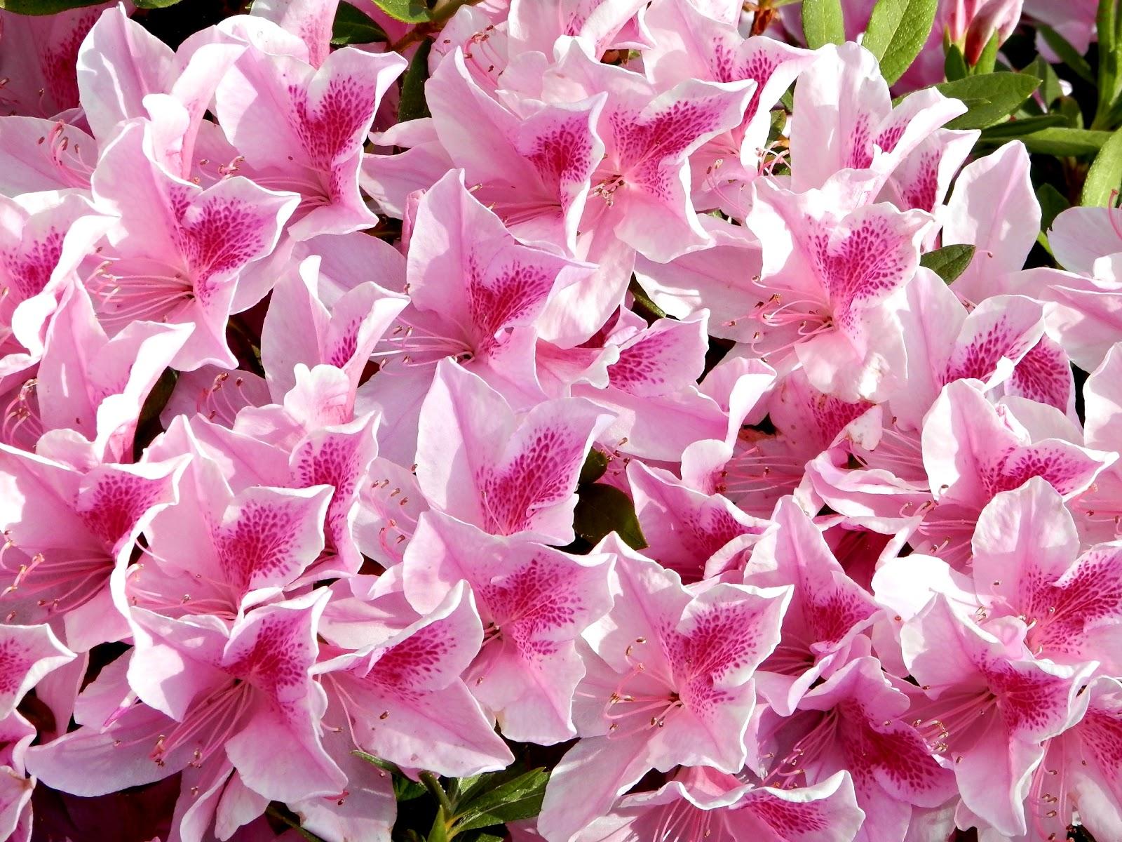 Blooming Iris Bed And Breakfast