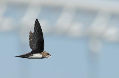 2. Mitos : Burung Pemangsa Berputar Tandanya Ada Bangkai