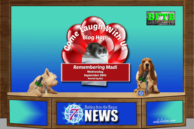 BFTB NETWoof News with dogs