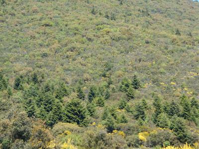 Ομοσπονδία Οικολογικών Οργανώσεων Κορινθιακού Κόλπου - Η Αλκυών - Η  προστασία των ορεινών δασών, γύρωθεν του Κορινθιακού, είναι πολιτική απόφαση
