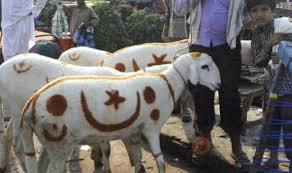 खुशख़बर...राष्ट्रीय मुस्लिम मंच ने इस साल बकरीद पर जानवरों की कुर्बानी न देने की अपील की हैं!!!