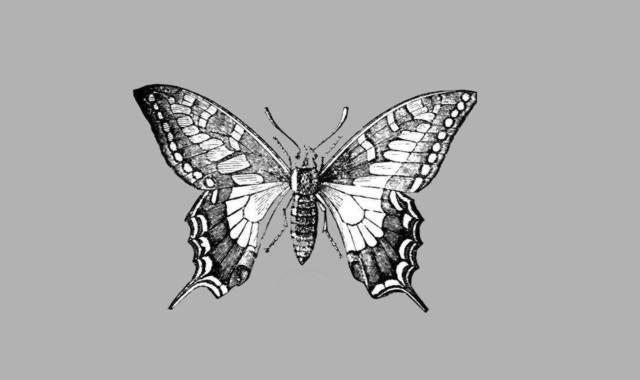 Schmetterlingsgedichte