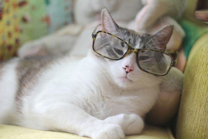 Cats with spectacles: 25