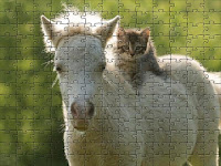 The horse and the cat