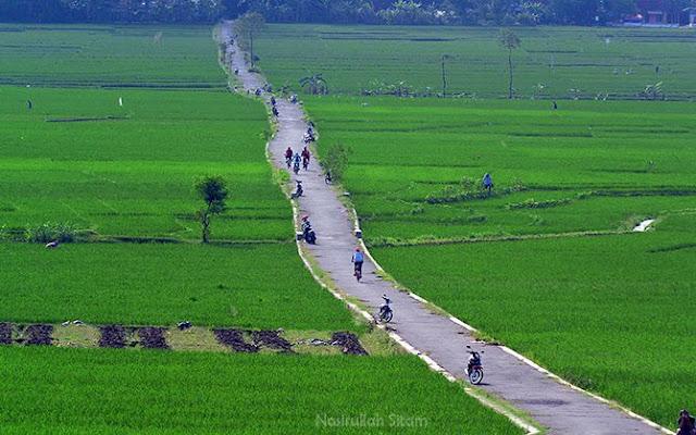 Jalan di tengah-tengah persawahan yang hits di Nanggulan