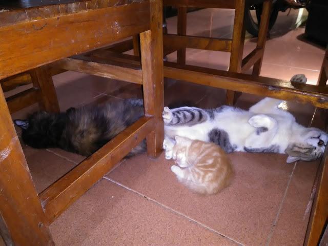 Foto kucing tidur bareng