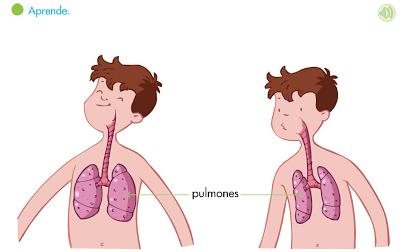 activitat1_aparell_respiratori
