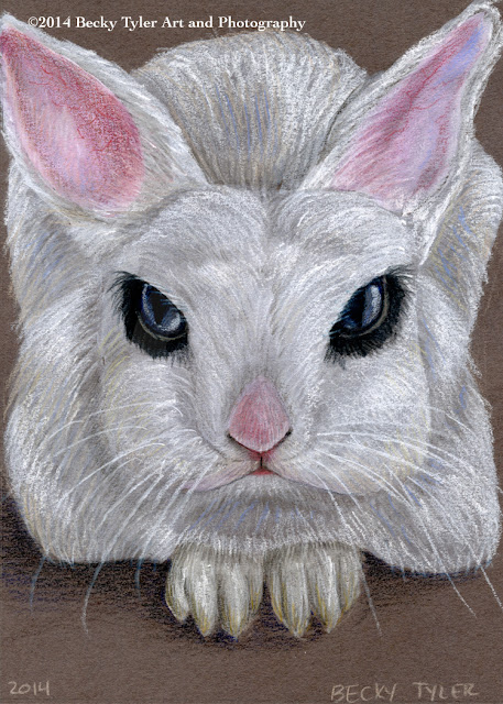 Netherland Dwarf Rabbit, Colored Pencil & Watercolor