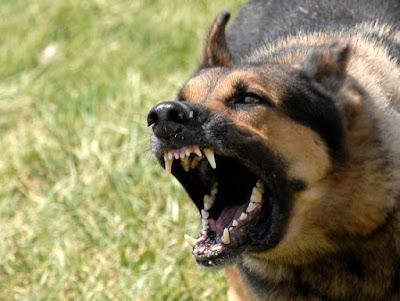 Как отвлечь собаку - нападение собак