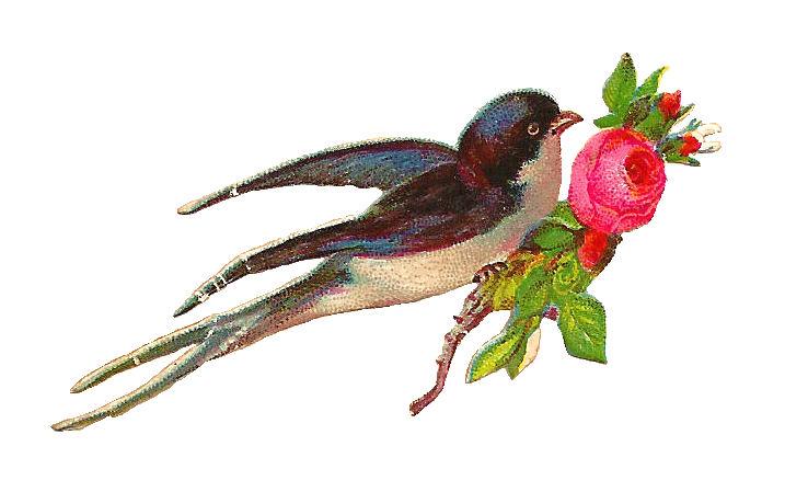 http://4.bp.blogspot.com/-OMvxSVf7fzQ/UaUNItlQDJI/AAAAAAAAOgk/V3LYvD4VQgA/s1600/birdscrap003.jpg