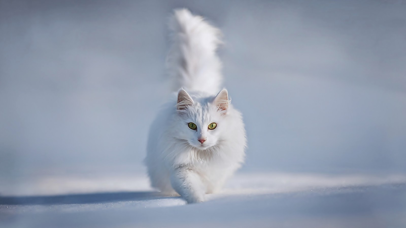 Unique Cat Wallpaper Hd Full Hd Cat Wallpaper