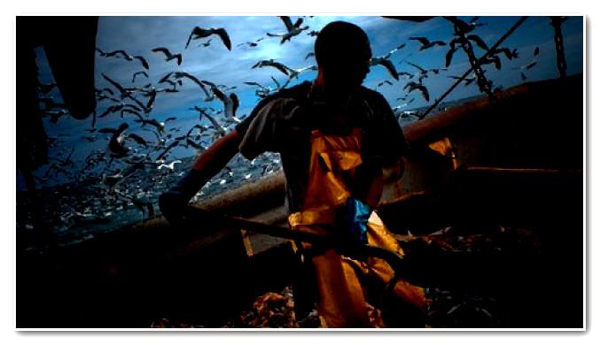 اعتصام 700 صياد أمام وزارة الفلاحة والصيد البحري