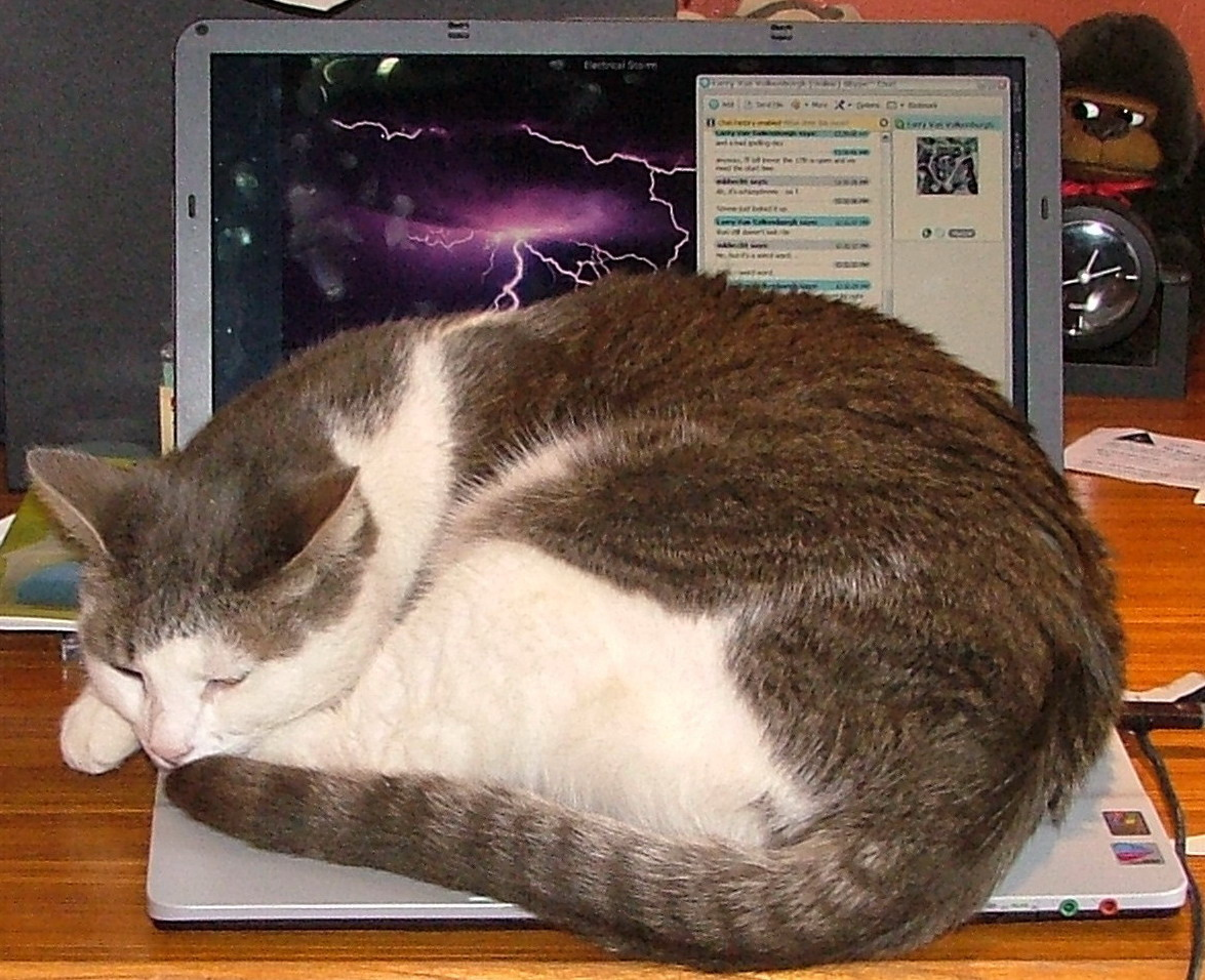 Happy Birthday Cute Baby Wallpaper Funny Amp Cute Cats Using Laptop Funny And Cute Animals