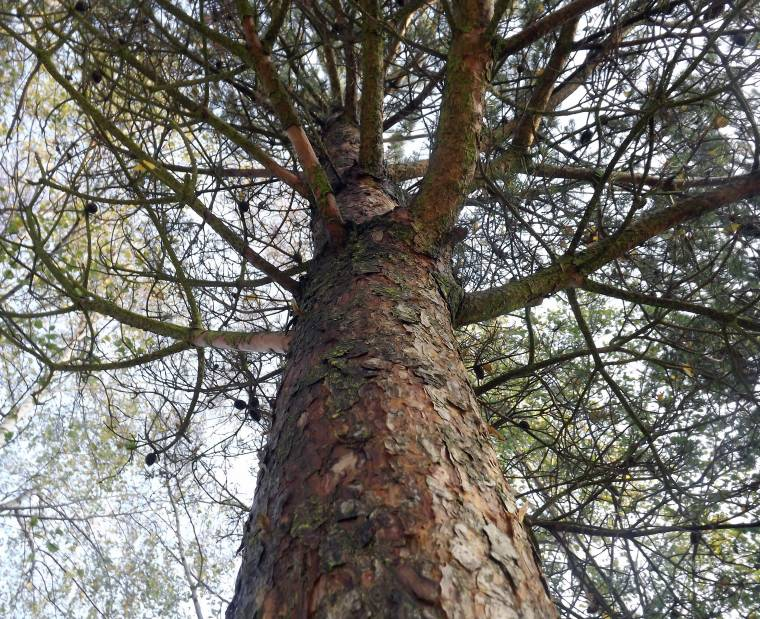 A Walk In The Woods: Wordless Wednesday Linky