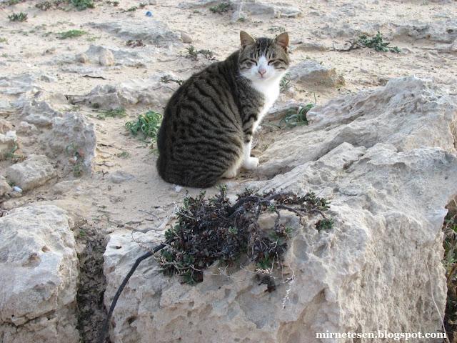 Каво Греко - кот с британской радиолокационной станции