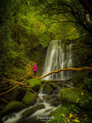 Catlins, Matai Falls, New Zealand, NZ, Southland, Waterfall, Horseshoe Falls