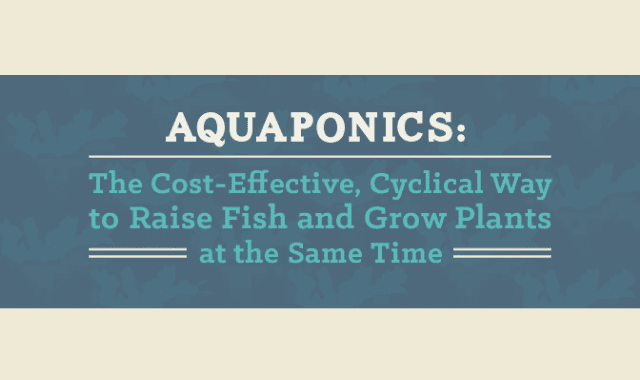 Aquaponics: The Cost-Effective, Cyclical Way to Raise Fish and Grow Plants at the Same Time