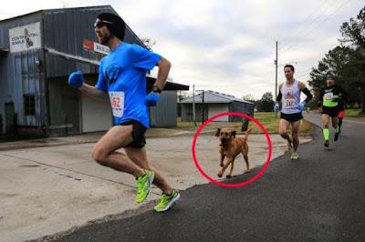 ¡Les ganó a casi todos! Un perro corre una maratón y termina séptimo