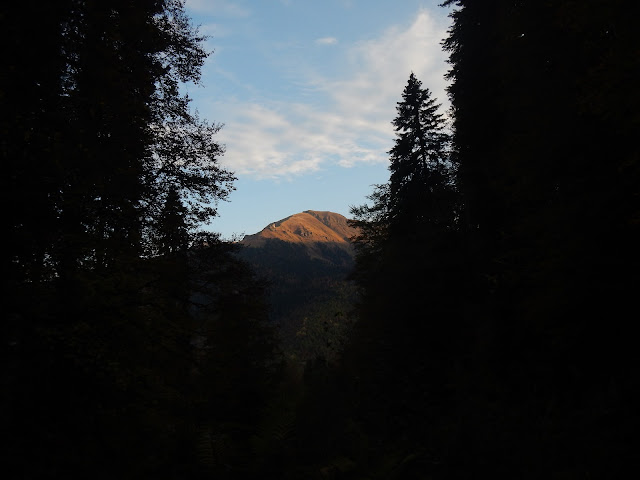 Горы, Лес, Кавказ