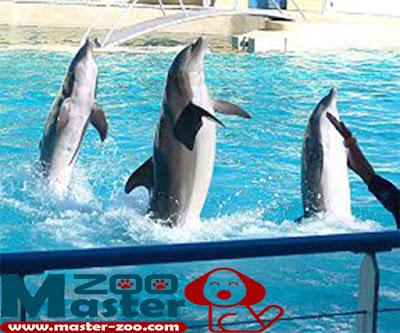 معلومات عن الدولفين وأنواعه Dolphin