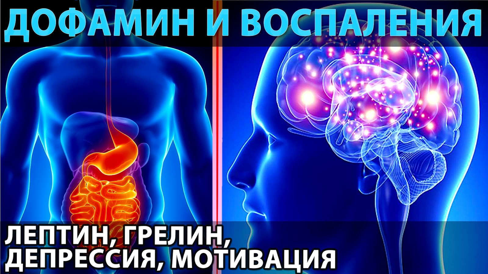 Дофамин и воспаления, мотивация и депрессия