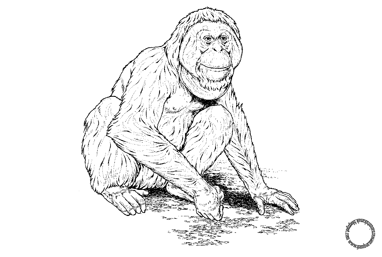 Gambar Mewarnai Orangutan Untuk Anak