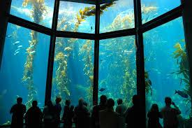 Best Aquariums in the USA: Monterey Bay Aquariums