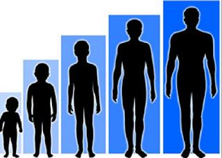 4 Cara Meninggikan Badan Secara Alami Dalam Waktu Singkat 99% Berhasil