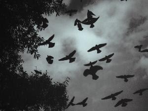 வர்தா புயலில் சிக்காமல் , பறவைகள் தப்பியது எப்படி?