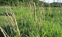 A mixed-grass community prairie in Iowa. (Credit: Denise Krebs (Flickr) via a Creative Commons License) Click to Enlarge.