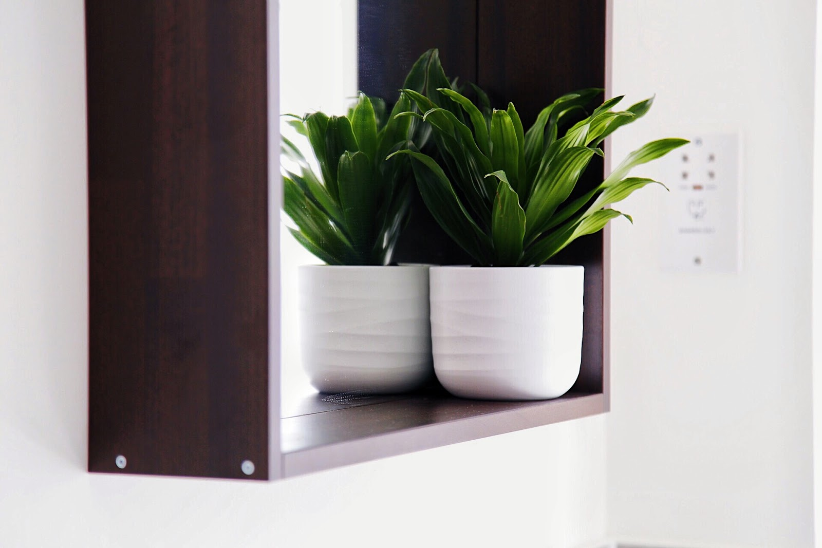 Leafy plant in white pot on IKEA Molger mirror.