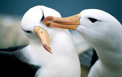 6 Pelajaran cinta yang bisa dipetik dari binatang