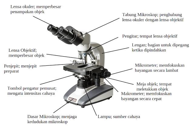 Fungsi Bagian-Bagian Mikroskop