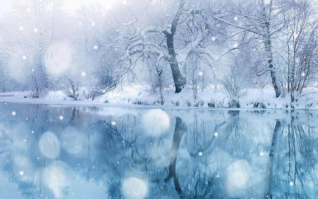 Bomen en sneeuw op de oever van een bevroren meer
