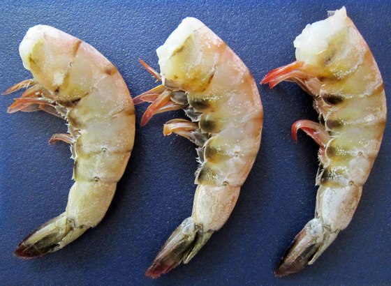 Today is...Fava Beans!: Pacific White Shrimp (Litopenaeus ... - photo#1