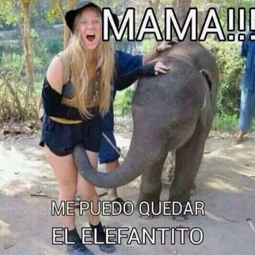 Mama me puedo quedar elefantito