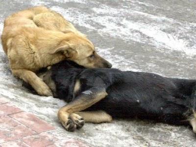 Καστοριά: Νεκρά από φόλες τέσσερα αδέσποτα σκυλιά στο κέντρο της πόλης