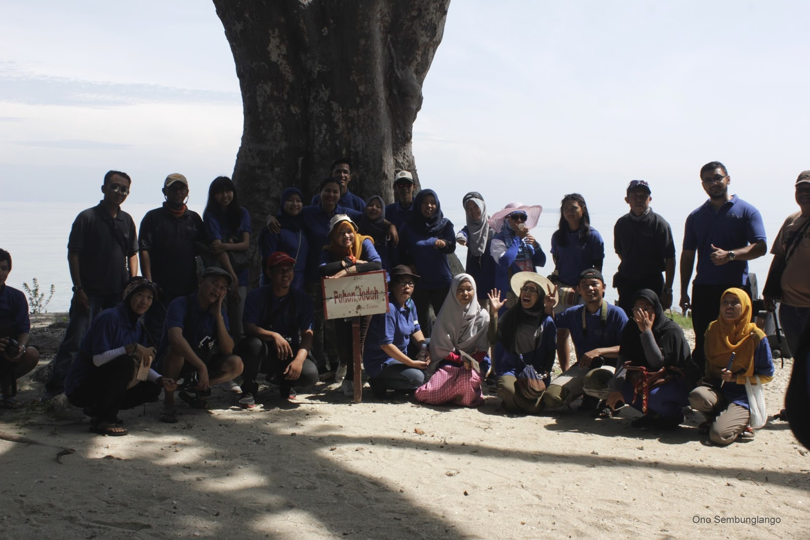 Pohon Jodoh