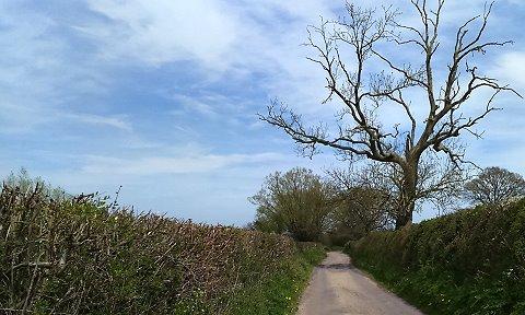 Henstridge, Somerset, England Spring 2016