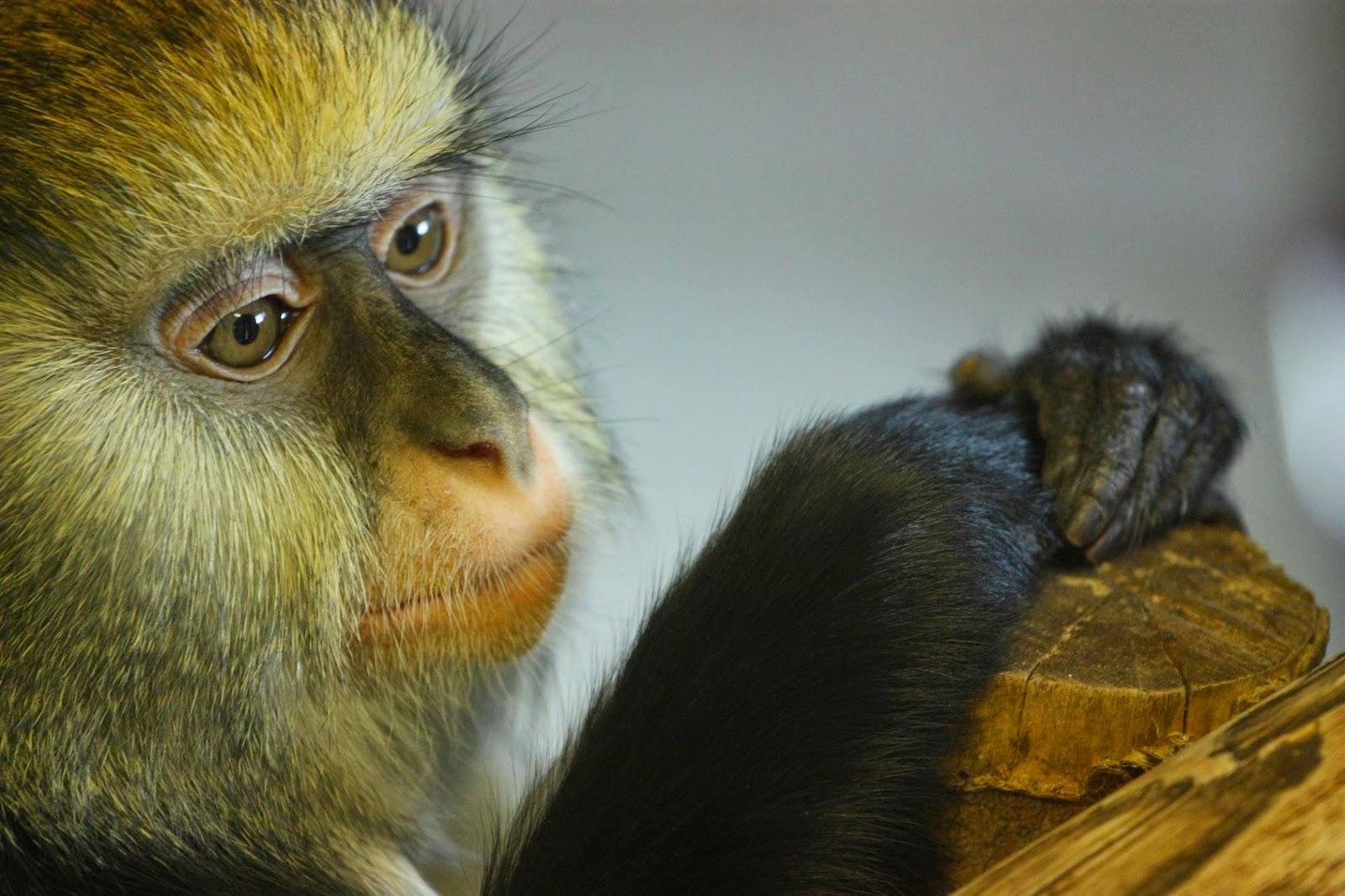 Fun Animals Wiki, Videos, Pictures, Stories: Do Monkeys
