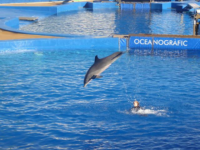 delfini nell'oceanografic di valencia