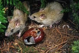 caracol e rato