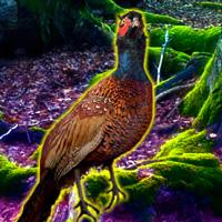 BigEscapeGames Pheasant F…