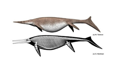 Inilah Monster Laut Prasejarah Raksasa Sejati, Paus Biru Minggir