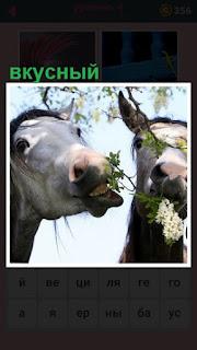 лошади питаются вкусными растениями и цветами