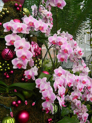Pink Phalaenopsis topiary detail at the 2018 Allan Gardens Conservatory Winter Flower Show by garden muses--not another Toronto gardening blog